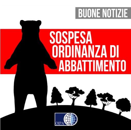 """Trentino, il Tar sospende l'ordinanza """"ammazza orsa"""" Gaia ..."""