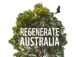 L'Australia un anno dopo i mega-incendi: 49 specie hanno perso più dell'80% del loro habitat (VIDEO)